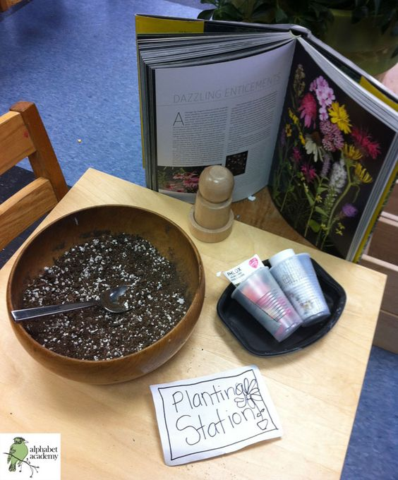 Planting station — seeds, soil, small cups to plant in, and a book about flowers! — Alphabet Academy South Pre-K http://thealphabetacademy.com #reggio-inspired #planting #flowers #stations #soil #seeds #prek