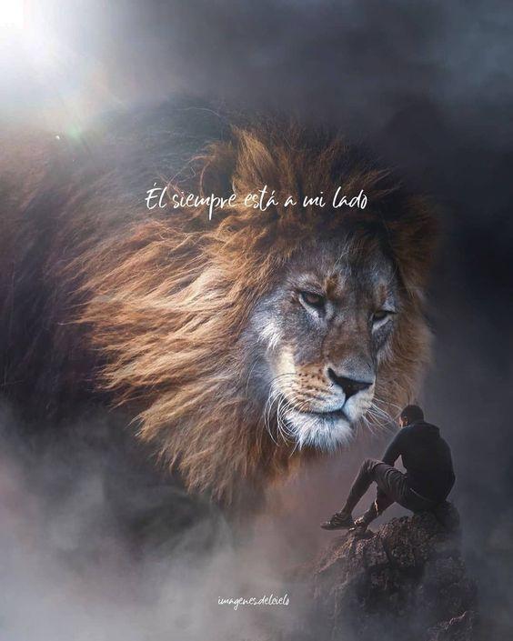 ▷ 100+ Imágenes Cristianas de Leones y Águilas ¡Aleluya!