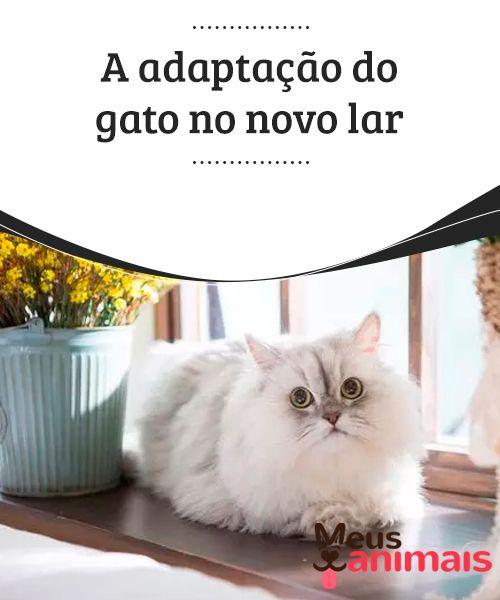A Adaptacao De Um Gato No Novo Lar Com Imagens Gatos Gato Sem
