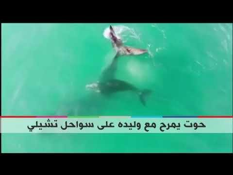 بي بي سي ترندينغ صور رائعة لحوت يمرح مع وليده Pandora Screenshot Videos Pandora