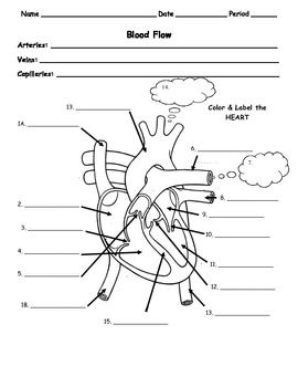 Printables Heart Worksheets human body circulatory flow of blood in the heart worksheet teacherspayteachers com