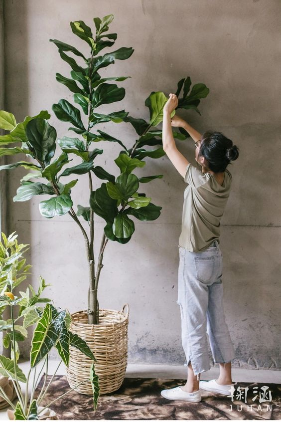 Most Realistic Cheap Indoor 120cm 47in Artificial Ficus Lyrata Banyan Fiddle Leaf Fig Tree, View artificial ficus tree indoor, EasyNature, EasyNature Product Details from Shenzhen NatureEasy Crafts Design Co., Ltd. on Alibaba.com