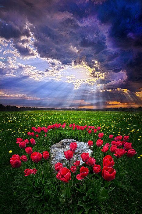 For You Are With Me Print By Phil Koch