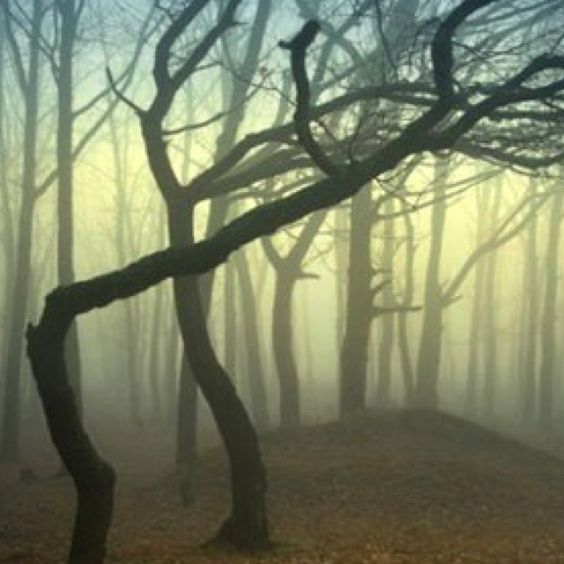 Love how these trees look,calm but alittle spooky!!!!!!!