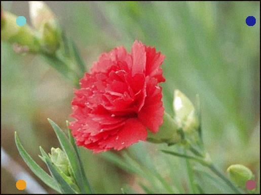 The Scarlet Carnation Is The State Flower Of Ohio Flowers Carnations Carnation Flower