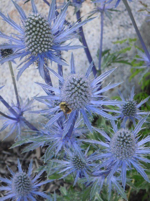 Fiori Blu E Bianchi.22 Best Plants For Sun With Summer Flowers Fiori Estivi Fiori E