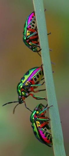 Beetles in a rainbow of colors.