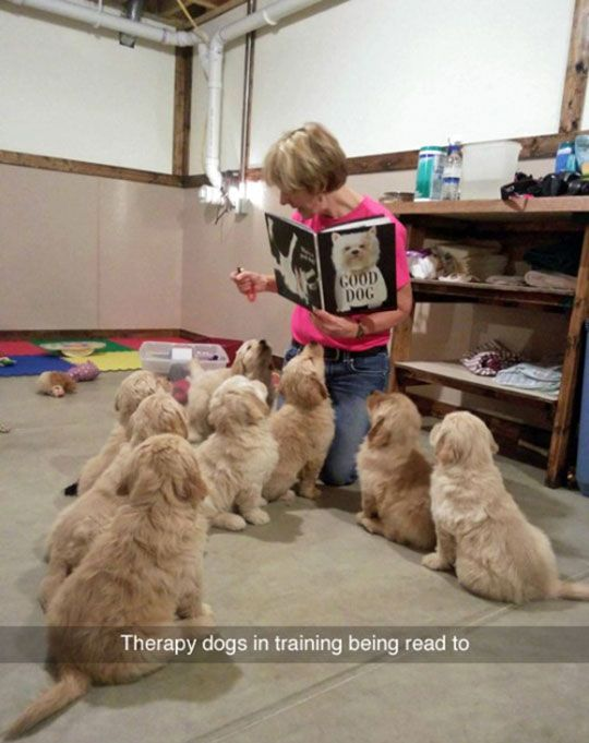 Therapy Puppies In Training: