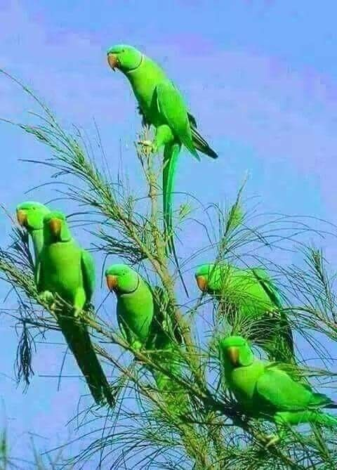 Nature Birds Birds Pet Birds Animals Beautiful