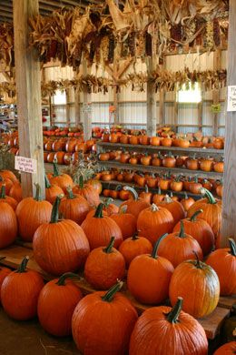 Yahoo Farm in Canton, GA.  Lots of fun things to do for younger kids, including a corn maze, hay ride, and a corn cannon. Great staff!! And a great selection of a variety of different pumpkins.: