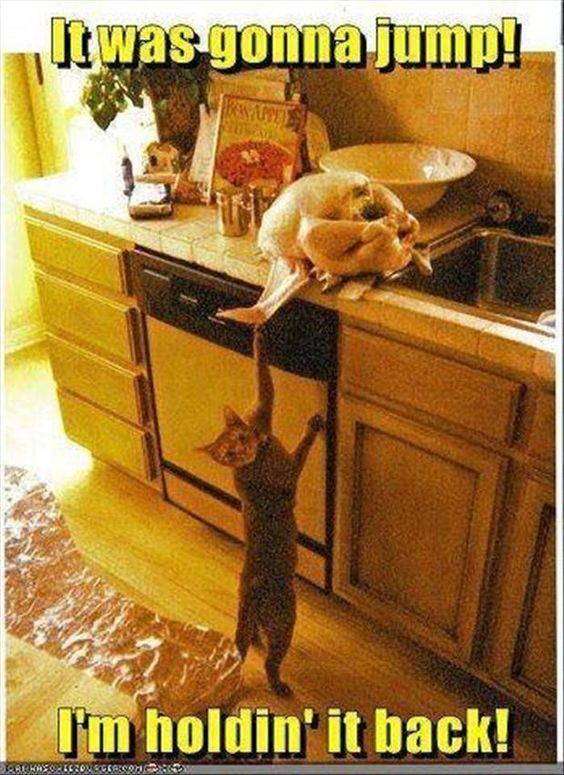 jumping turkey: