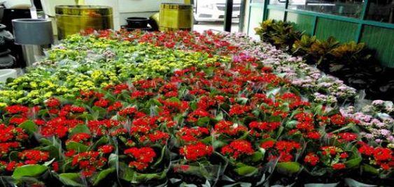 الورد هو ملك الزهور بأنواعه المختلفة التي تناهز الخمسين نوعا وهو رمز الحب والسعادة والفرح Flowers Flower Flowershop Egflor Plants Paisajes