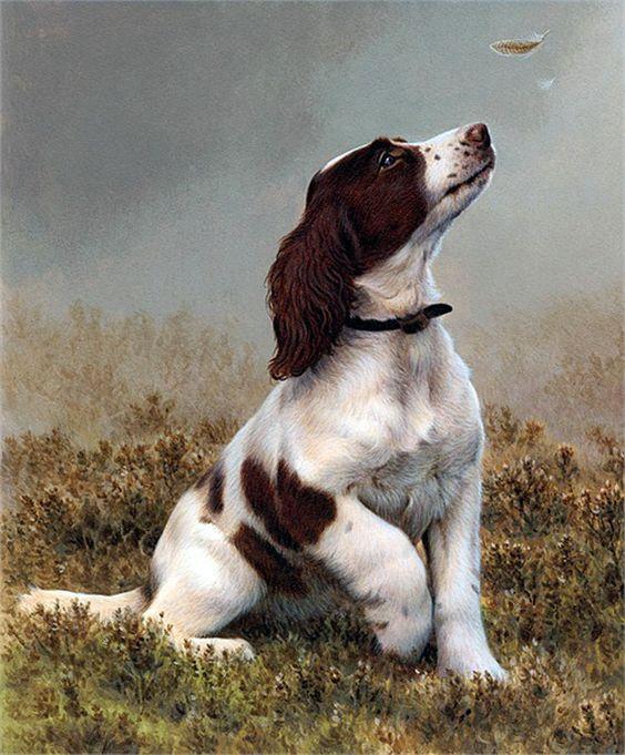 Beautiful English Springer Spaniel ..... Andrew Hutchinson art