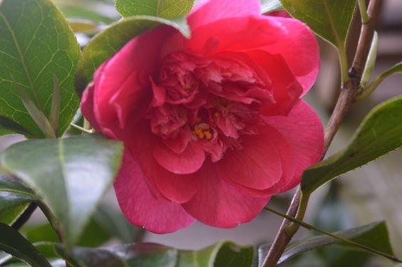 #Pink,#Flower,#Garden,    #Photography. 🌷💕📷🌿