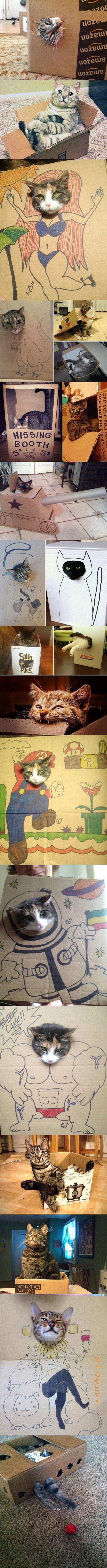 Katzen lieben Kartons.