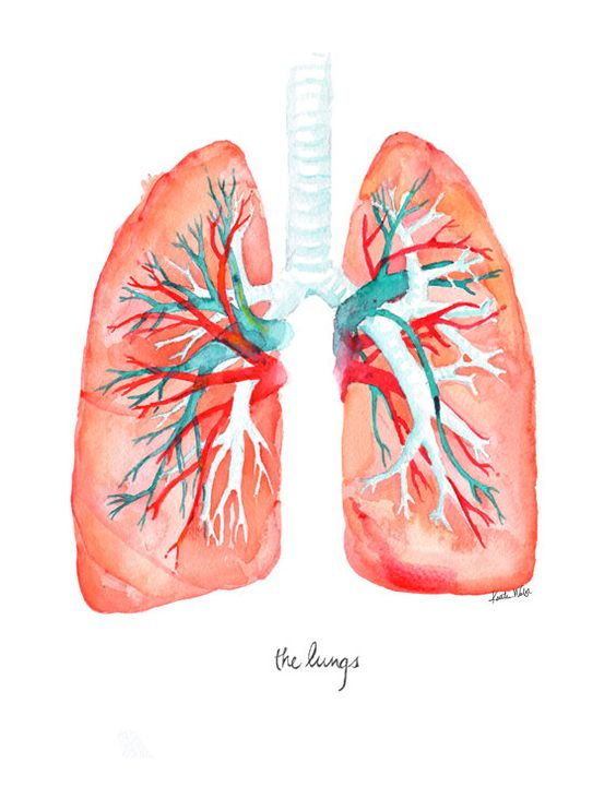 Lungs Art Print Lung Watercolor by LyonRoad on Etsy: