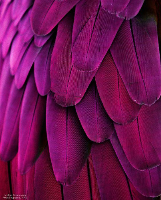 Feathers | Magenta