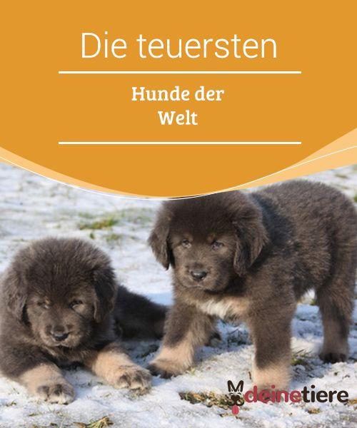Die Teuersten Hunde Der Welt Wie Sie Heissen Und Wie Viel Sie