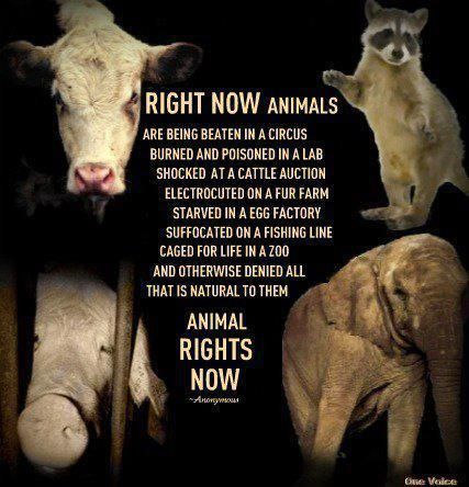 Get involved in animal rights. PLEASE!