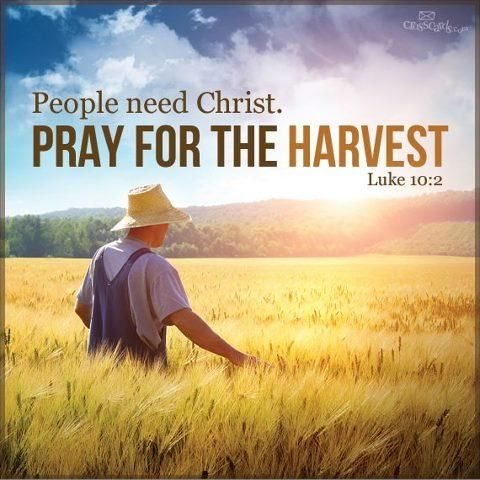 Image result for laborers of the harvest