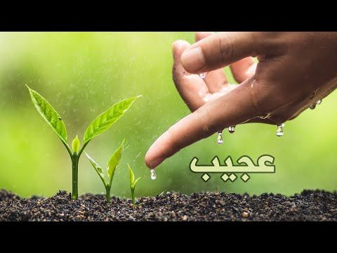 تدبر عجيب لآية إن الله فالق الحب والنوى Youtube Plants Planting Seeds Do Your Best