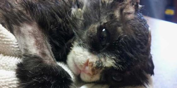 Justin, a kitten and burn survivor, rests (© Animal Alliance of New Jersey via Facebook)