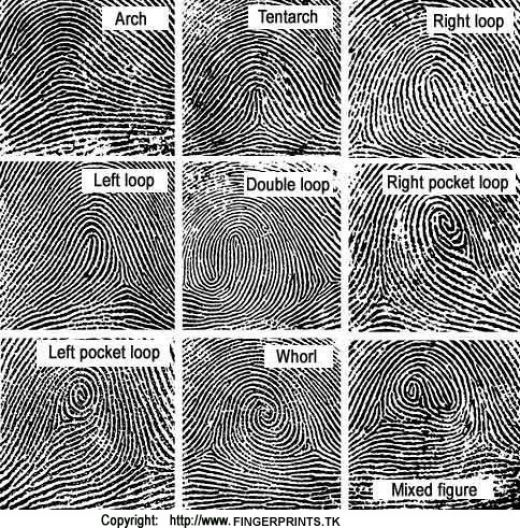 Fingerprint Findings