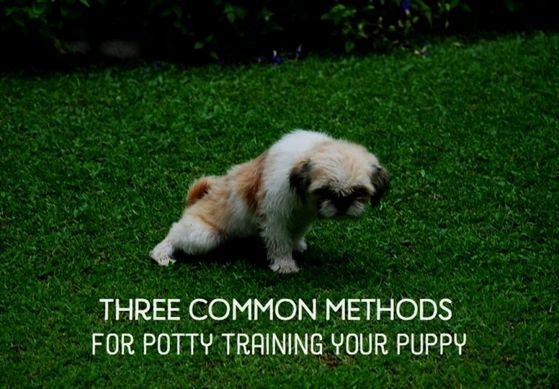 Dog Training Book For Kids Dog Training Videos Youtube Dog