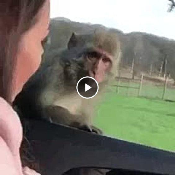 Mulher assusta macaco.