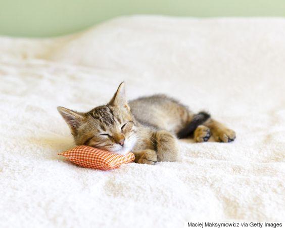 Amateurs de chats, réjouissez-vous: votre animal domestique n'est pas qu'une boule de poils adorable et douce, il est aussi particulièrement bon pour votre santé. Même les propriétaires de chiens ne peuvent nier les nombreux bénéfices qu'apporte le fait de posséder un animal domestique, quelle que soit son espèce. Selon les chercheurs, les animaux domestiques empêchent …