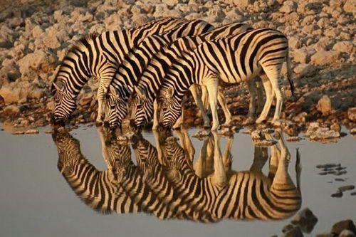 Google-kuvahaun tulos kohteessa http://3.bp.blogspot.com/_8M4A38LyBBs/TF-p41JqXeI/AAAAAAAAbyw/LSdLHWTXW5c/s1600/reflection%2Bphotos9.jpg