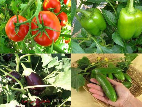 طريقة زراعة الطماطم بالبذور من طماطم موجودة بالثلاجة Youtube Plants Stuffed Peppers Vegetables