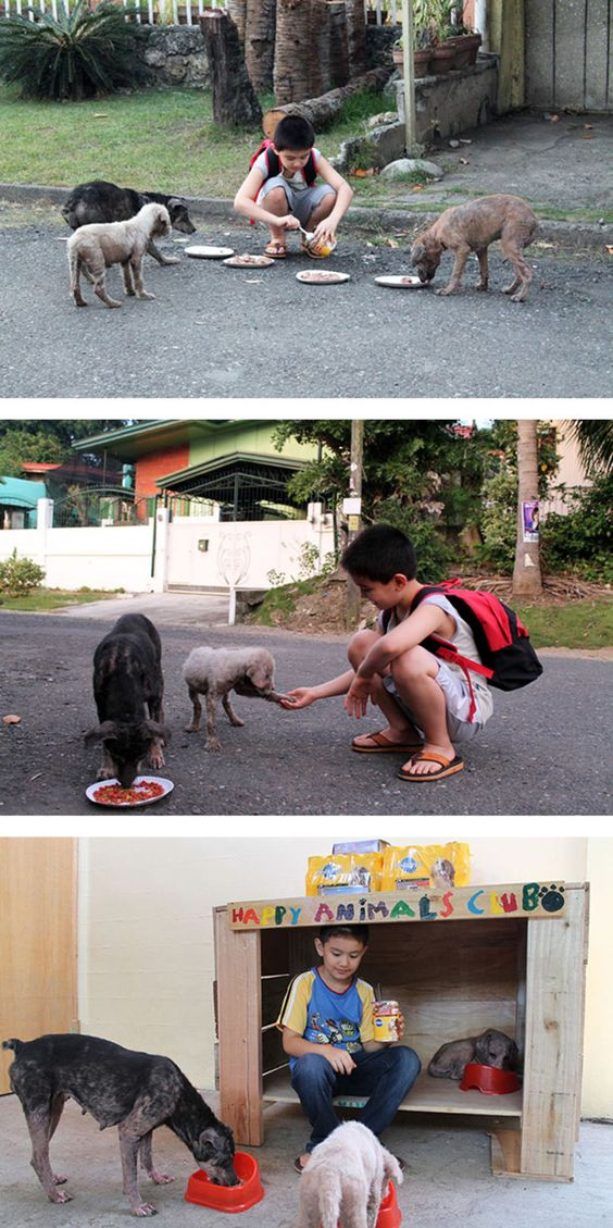 Happy Animals Club 2. 9-year-old Ken from the Philippines creates a no kill animal shelter in his garage.