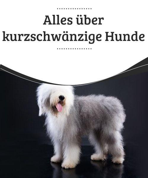 Alles Uber Kurzschwanzige Hunde Hunde Hunderassen Hundehaltung