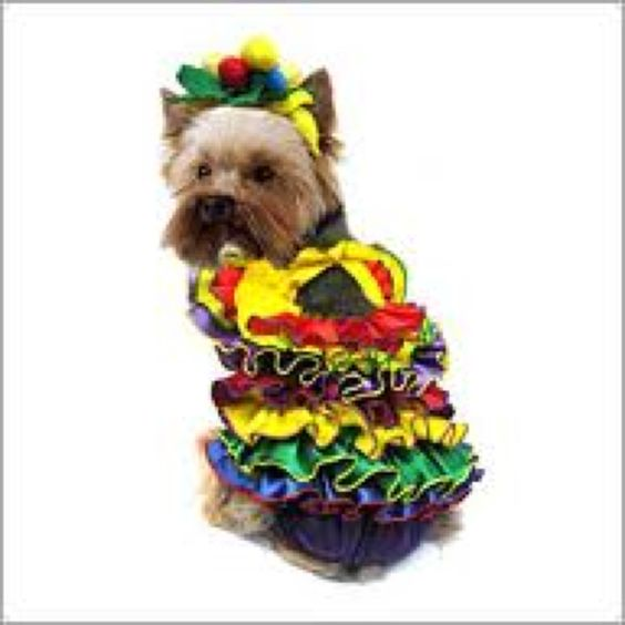 I want this for my dog.. (: