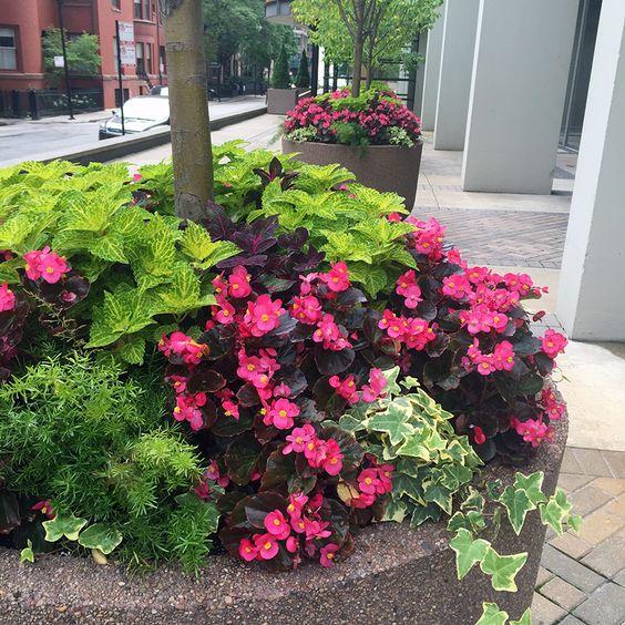 Summer annuals planter container urban garden for Annual garden designs