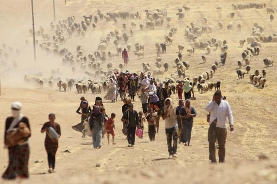 Displaced Yazidi walk towards the Syrian border, on the outskirts of Sinjar Mountain, on their way to safety in Iraqi Kurdistan on Aug 10.