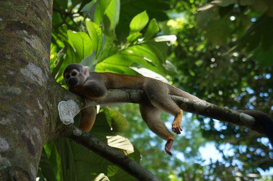 """""""Insel der Affen"""" ist der am meisten besuchte Ort im #Amazonas von #Kolumbien."""