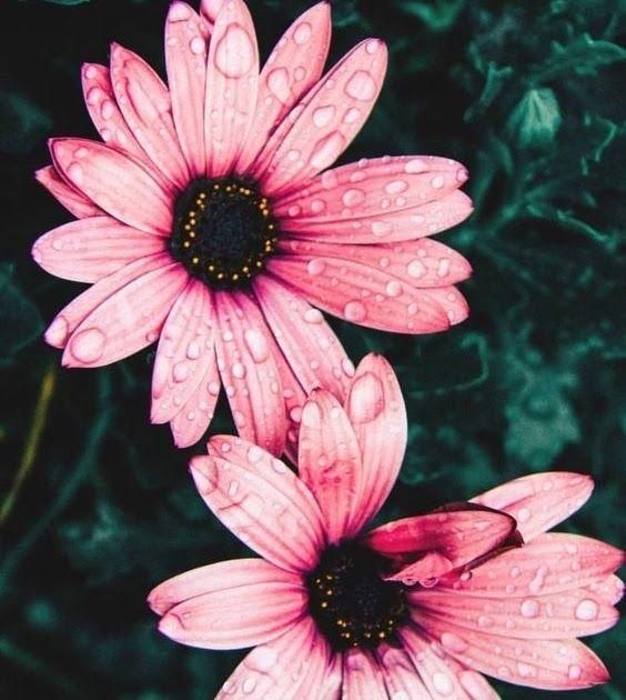 Foto Bunga Untuk Wallpaper