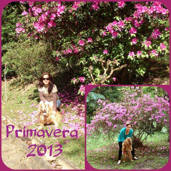 Parque Malwee toda primavera a mesma árvore...linda ...