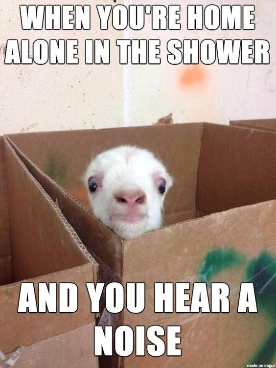 "Cute & funny baby goat meme. ""When you're home alone in the shower and you hear a noise."":"