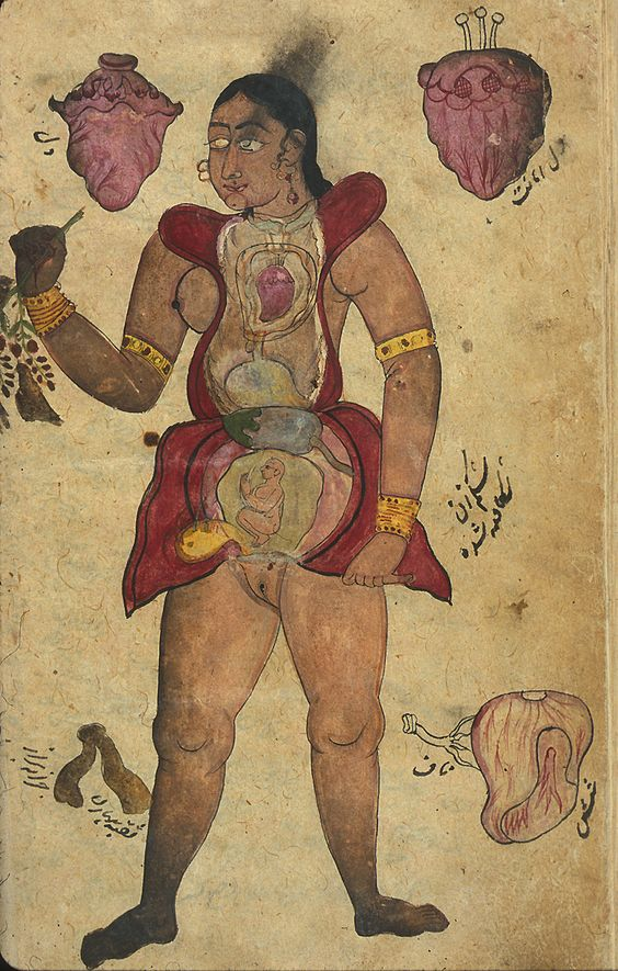 Illustrations, in ink and opaque watercolors, of a pregnant woman with abdomen and chest opened to reveal the internal organs and fetus. Surrounding the figure are drawings of [at the top] two hearts, [lower right] the lungs, and something unidentifed in the lower left (labeled the opening of the vagina). Undated and unsigned, probably 18th century, India.