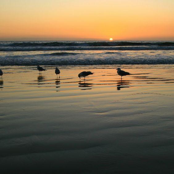 Gaivotas 2048x2048 Papel de Parede, à noite, areia, molhada