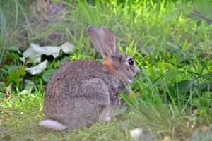 Rabbits, Raccoons, and Squirrels, Oh My! A Guide to Keeping Little Beasties Out of Your Garden - http://www.organicfarmingblog.com/rabbits-raccoons-squirrels-my-guide-keeping-beasties-garden/
