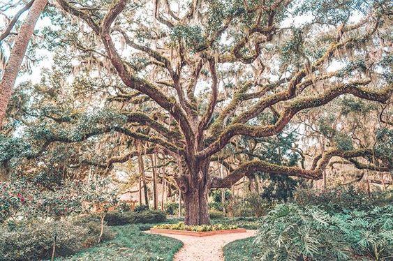 Starý strom 2e71b86b212b2d16ae7802ed53de1ba5