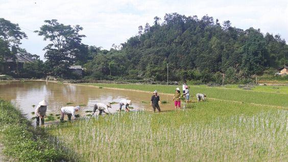 Immersion à la vie quoditienne et aux travaux champêtres des locaux à Yen Son. Http://aventure-vietnam.com: