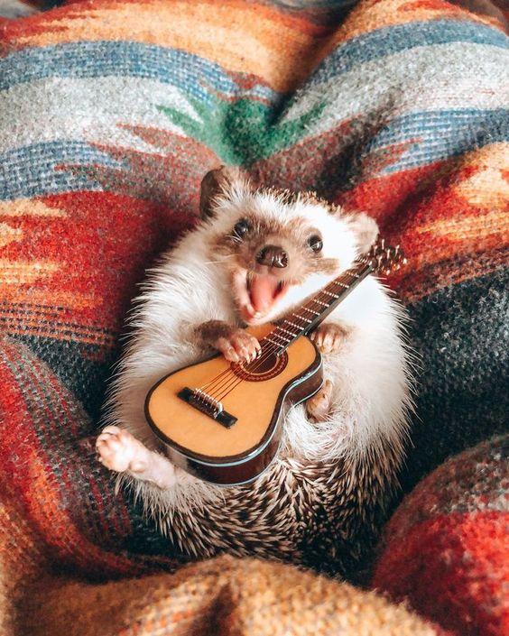 This Hedgehog's Life Is More Interesting Than Mine: Meet Cheerful Animal Named Herbee, фото № 9У этого ежа жизнь интереснее, чем у меня: жизнерадостный зверек по имени Herbee, фото № 9