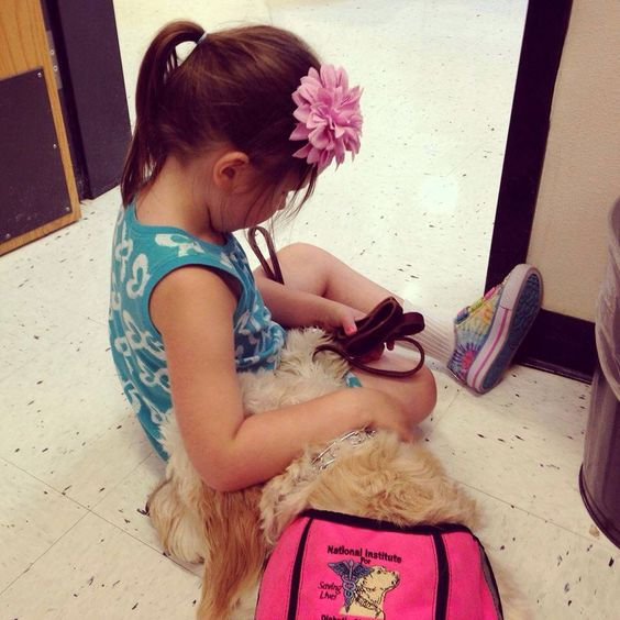 This is Zoe, she's 5. This is her snuggling with her alert dog, after a low at school. She was diagnosed at 2. #freediabetics #type1diabetes #diabetic #t1d #weneedacure