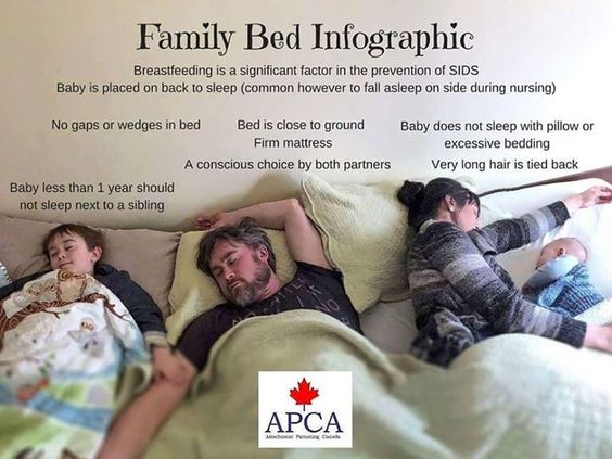 Family Bed Infographic: