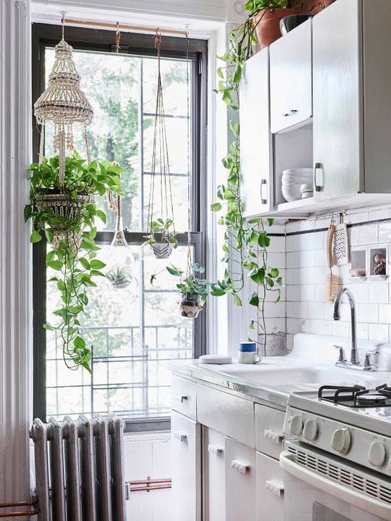 plantes cuisine: